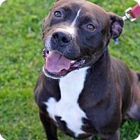 Adopt A Pet :: Jax - Niagara Falls, NY