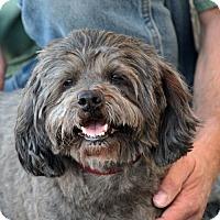 Adopt A Pet :: Smokey - Palmdale, CA