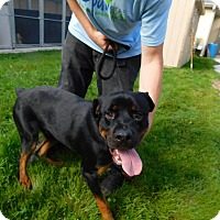 Adopt A Pet :: Rottstar - Frederick, PA
