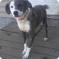 Adopt A Pet :: Addy - Warner Robins, GA