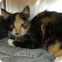 Adopt A Pet :: ADDISON - Gloucester, VA