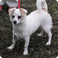Adopt A Pet :: Bailey - Maynardville, TN