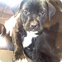Adopt A Pet :: Granger - Enid, OK