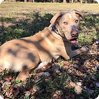 Adopt A Pet :: Dudley - Ft. Myers, FL