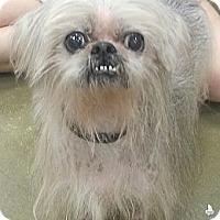 Adopt A Pet :: Telly - Orlando, FL