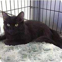 Adopt A Pet :: Lile - Phoenix, AZ