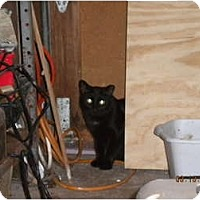 Adopt A Pet :: *Purrscilla - Winder, GA