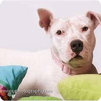 Adopt A Pet :: ALICE - Phoenix, AZ