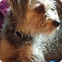 Adopt A Pet :: Razor - Hamilton, ON