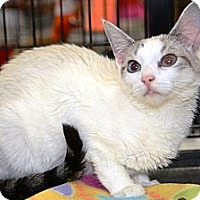 Adopt A Pet :: Jorge (Horhay) - Harrisburg, NC