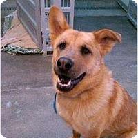 Adopt A Pet :: Max - Alliance, NE