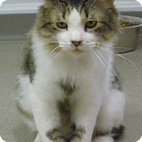 Adopt A Pet :: Moxi - Hamburg, NY