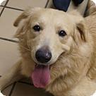 Adopt A Pet :: Roxanne
