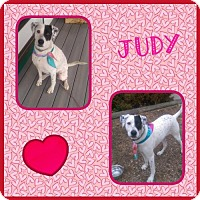 Adopt A Pet :: Judy - Fort Collins, CO
