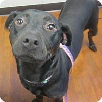 Adopt A Pet :: Virginia-LOVES DOGS - Oak Ridge, NJ