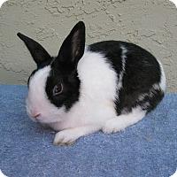 Adopt A Pet :: Calypso - Bonita, CA