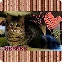 Adopt A Pet :: Chesnee - Harrisburg, NC