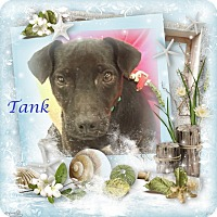 Adopt A Pet :: Tank - Crowley, LA