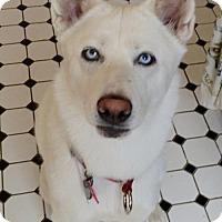 Adopt A Pet :: Myka - Campbell, CA