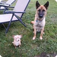 Adopt A Pet :: Rio - Elyria, OH