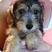 Adopt A Pet :: Nora - Greenville, RI
