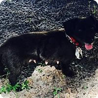 Adopt A Pet :: Lulu - Windermere, FL