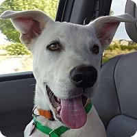 Adopt A Pet :: Hickory - Erie, CO
