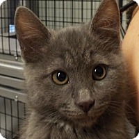 Adopt A Pet :: Elle - Grants Pass, OR