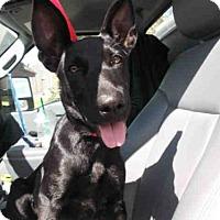 Adopt A Pet :: JENX - Pearland, TX