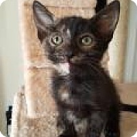 Adopt A Pet :: Diamond - Mission Viejo, CA