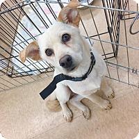 Adopt A Pet :: Luz - Smithtown, NY