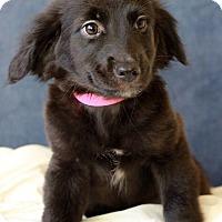 Adopt A Pet :: Juliette - Waldorf, MD