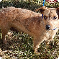 Adopt A Pet :: Kay (12 lb) Sweetest Girl Ever - West Sand Lake, NY