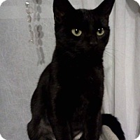 Adopt A Pet :: Cinder - Lindsay, ON