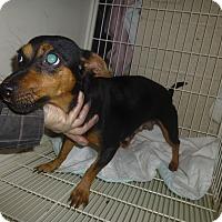 Adopt A Pet :: Patsy - Glastonbury, CT