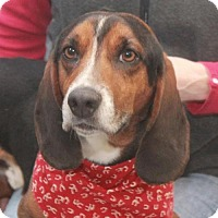 Adopt A Pet :: Harley-ADOPTED! - Garfield Heights, OH