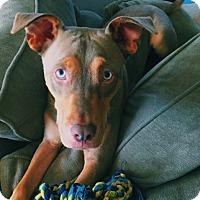 Adopt A Pet :: Damon - Blairsville, GA