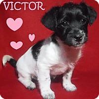Adopt A Pet :: Victor - Batesville, AR