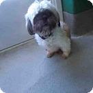 Adopt A Pet :: JORDON