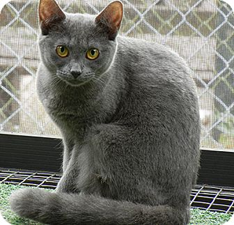 Domestic Mediumhair Cat for adoption in Orlando, Florida - Mystic