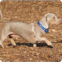 Adopt A Pet :: Blanket - Ft. Myers, FL