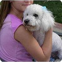 Adopt A Pet :: Bogart - La Costa, CA