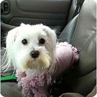 Adopt A Pet :: Tia - Rigaud, QC