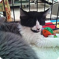 Adopt A Pet :: Stanley - Modesto, CA