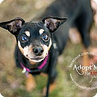 Adopt A Pet :: Katie - Myersville, MD