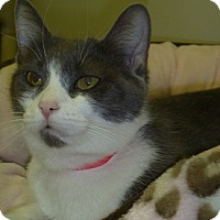 Adopt A Pet :: Blair - Hamburg, NY