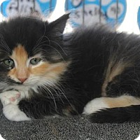 Adopt A Pet :: Mars - Caistor Centre, ON
