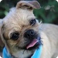 Adopt A Pet :: Rufus - Pismo Beach, CA