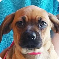 Adopt A Pet :: Yamie - Staunton, VA