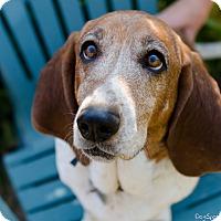 Adopt A Pet :: Dorothy - Salt Lake City, UT
